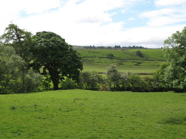 Pastures and woodland near Burn House (3)
