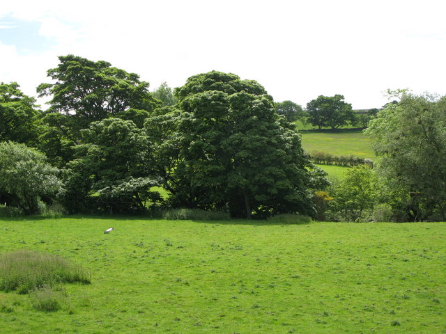 Pastures and woodland near Burn House (4)