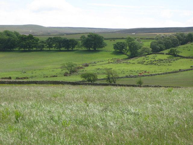 Pastures northwest of Burn House (2)