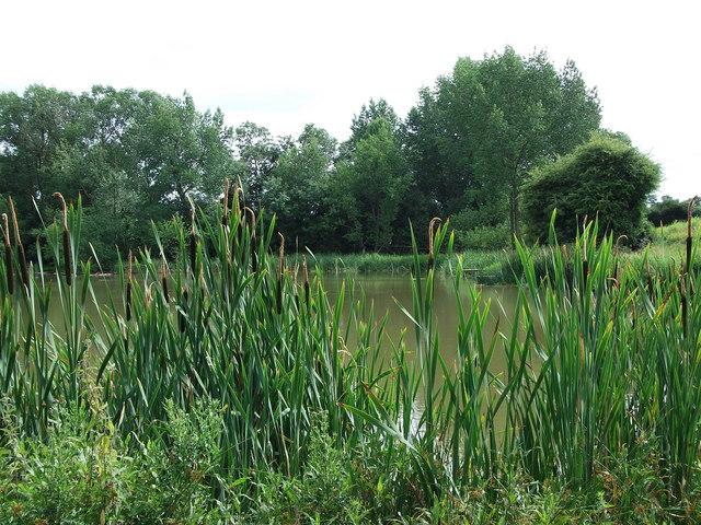 Newfield Pool, Stoneton