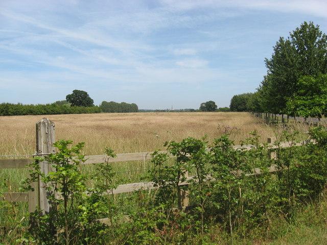 Arable land at Park Farm
