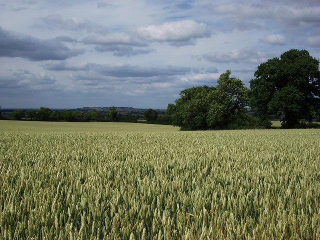 Looking towards Napton Hill from Wormleighton