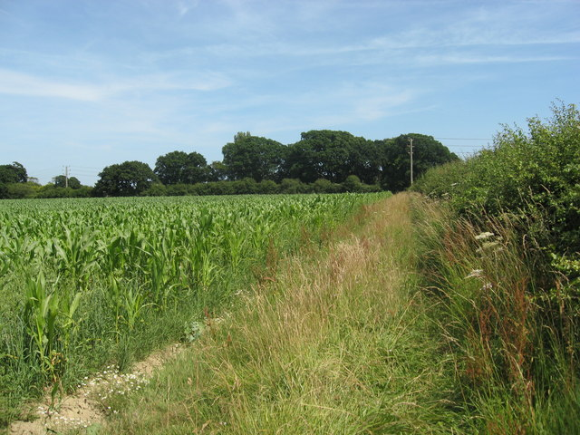 Field edge boundary with maize crop