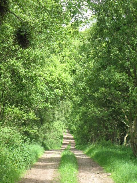 Track near Park Burn