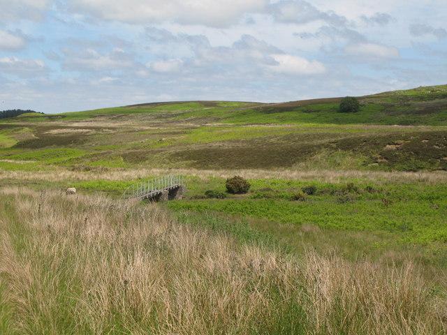 The valley of Park Burn below Ramshaw Fell (3)