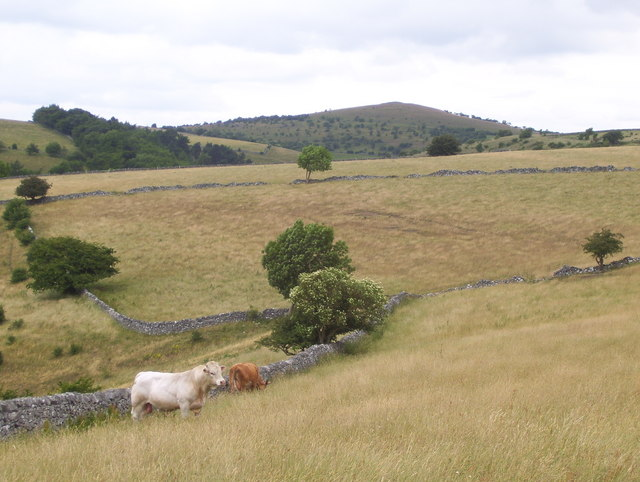 Pasture near Monsal Head