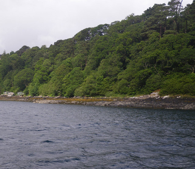Densely broadleaf forested shoreline at Rubha na Leip