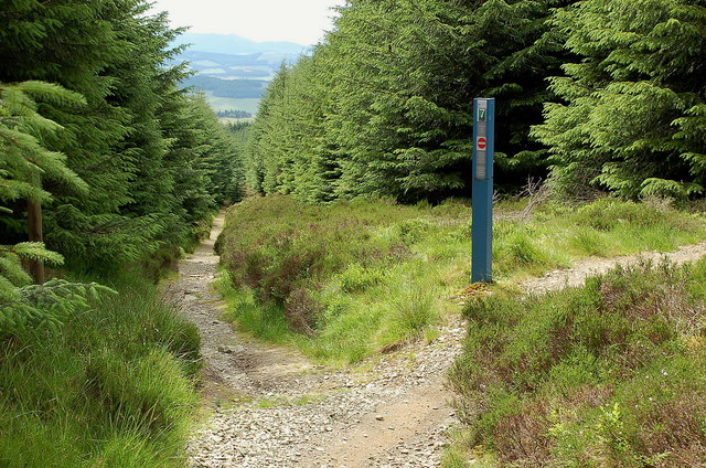 Track junction, Towers Trail