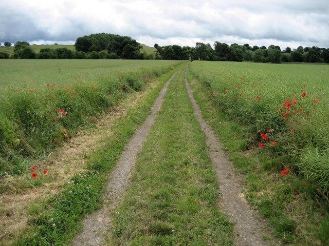 Track heading towards Fatten Hill