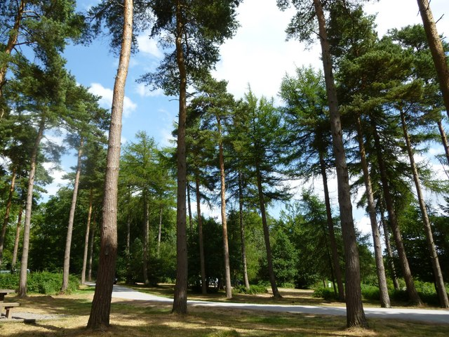 Wendover Woods (picnic area)