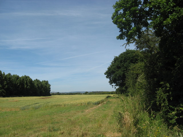 Field edge boundary, also a footpath towards Chichester