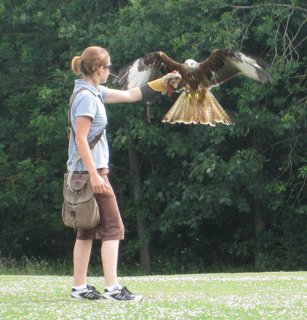 Handling birds of prey