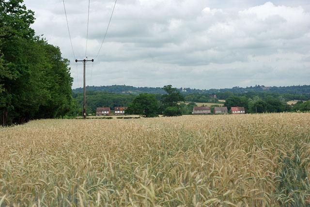Over the barley to Honeycrock Lane