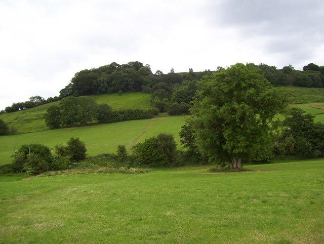Pasture near Bramley Wood