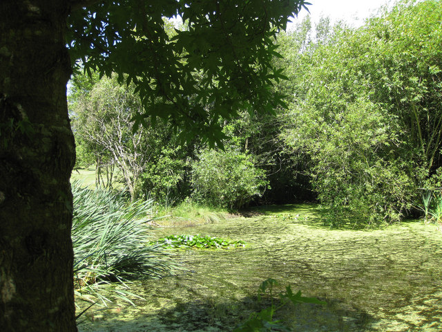 Lower pond area, ICBP