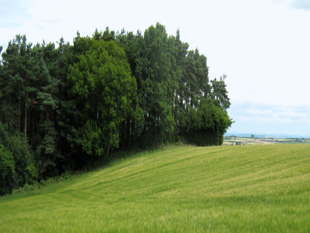Fields and woods near Dinnington