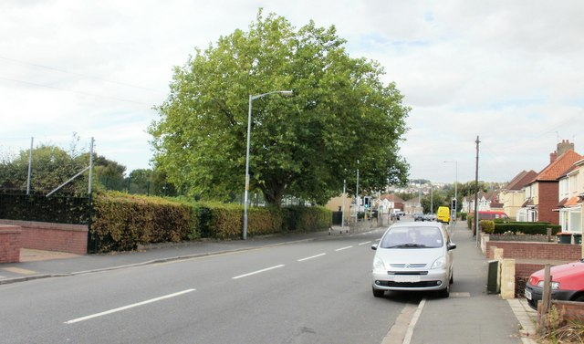 Tree at perimeter of a Liswerry school, Newport
