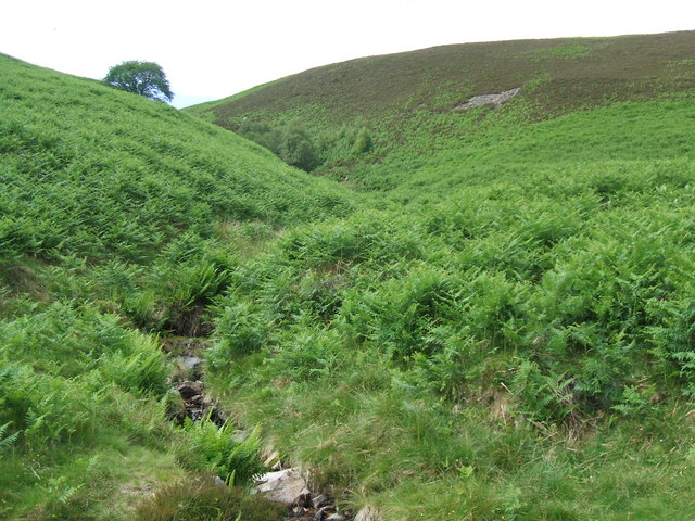 Looking up the beck towards Coomb Height