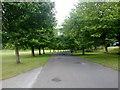 SD8203 : Avenue in Heaton Park by Bill Boaden