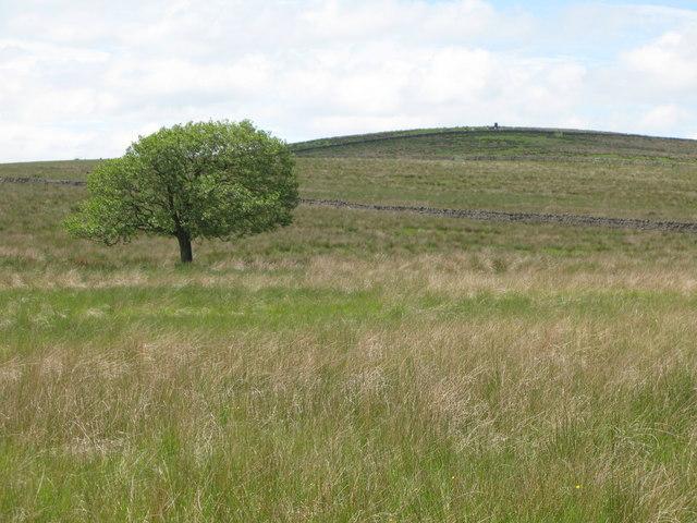 Featherstone Common