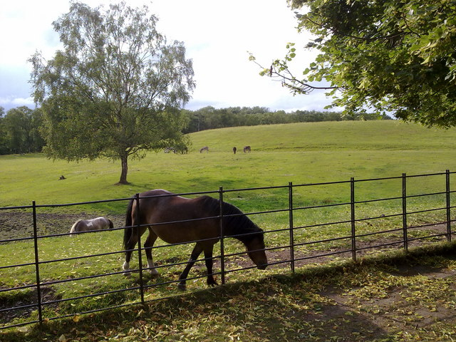 A field with ponies and donkeys