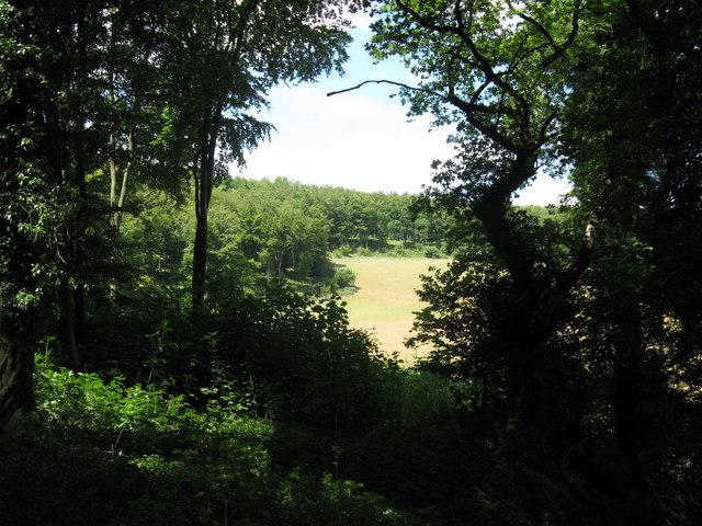 Wood Lea woods near Pond Barn