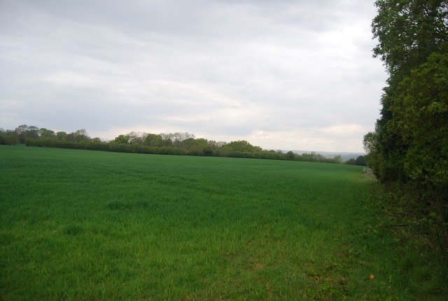 Wheat by the Sussex Ouse Valley Way