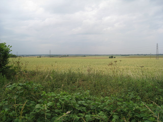 Wheat field near Cadney