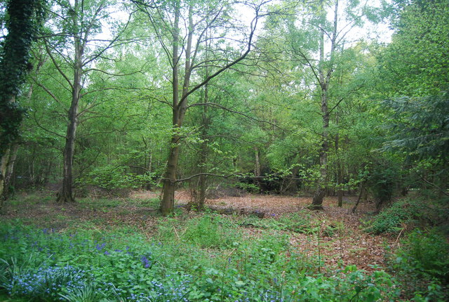 Woodland on the edge of Scaynes Hill Common