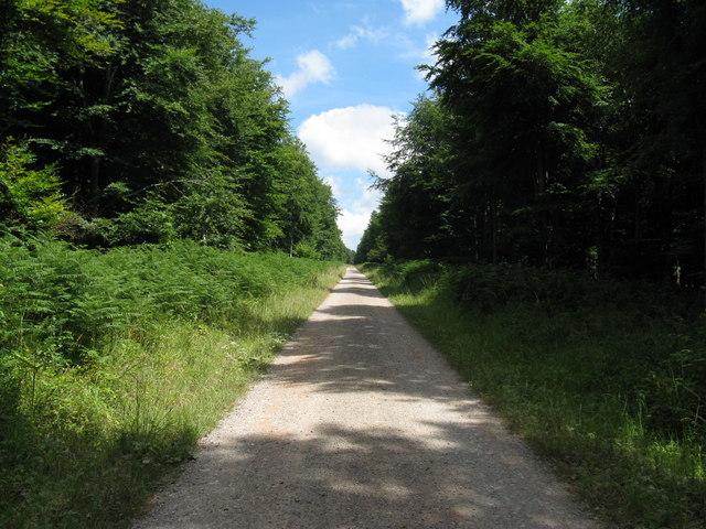 Straight road through Charlton Forest
