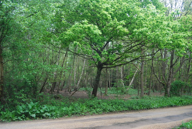Woodland, Scaynes Hill Common