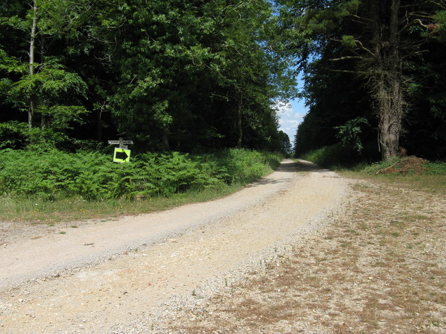 Forest road and bridleway junction in Charlton Forest