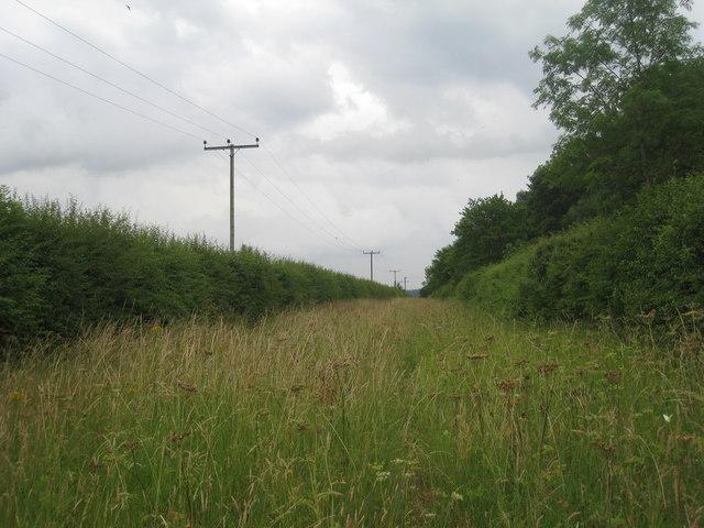Long, narrow field