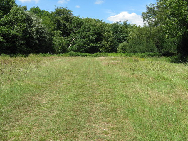 Footpath across clearing on Waltham Down