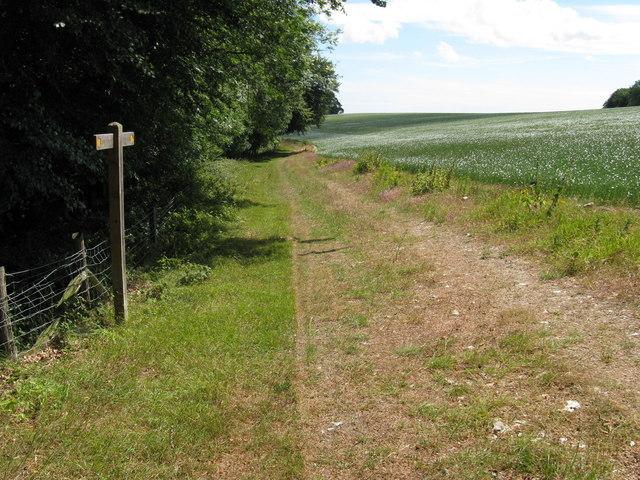 Downland crop on Heath Hill