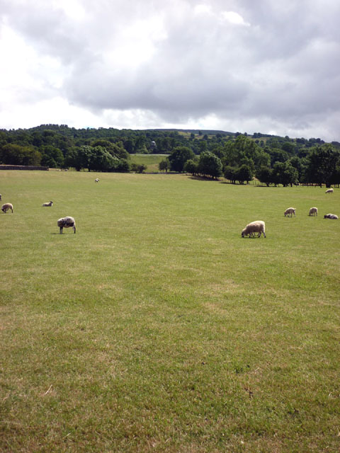 Sheep pastures by the Ure
