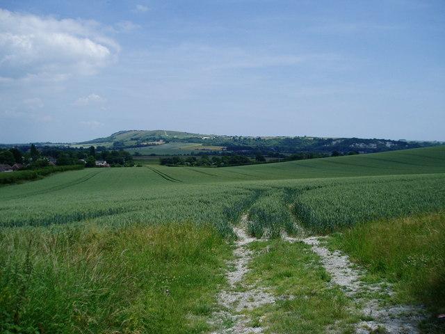 Crops south of Bury