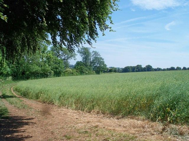 Field edge track