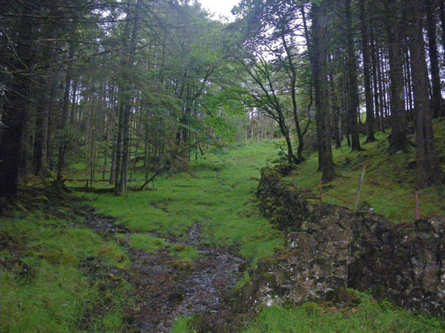 Drystone wall and forest clearing