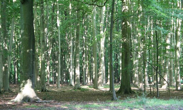 Trees in Ashridge Park