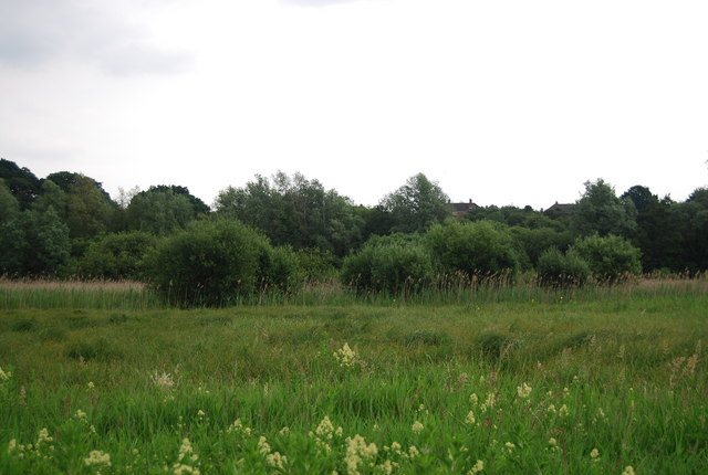 Floodplain of the River Yare