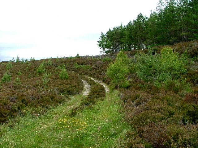 Track at the edge of Duthil Plantation