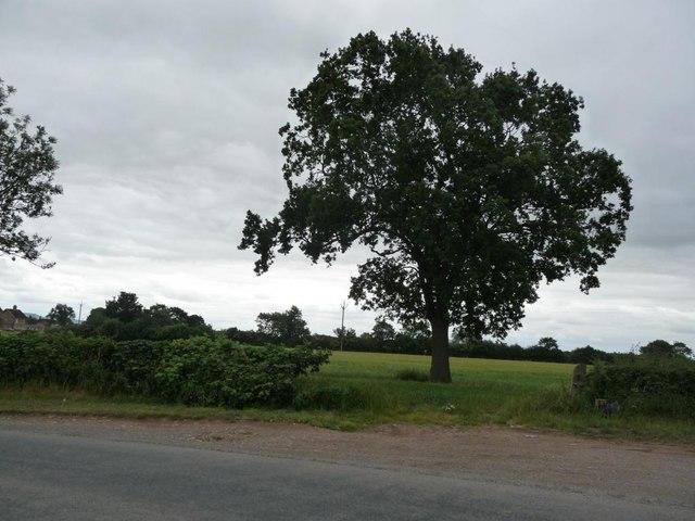 Tree at field entrance