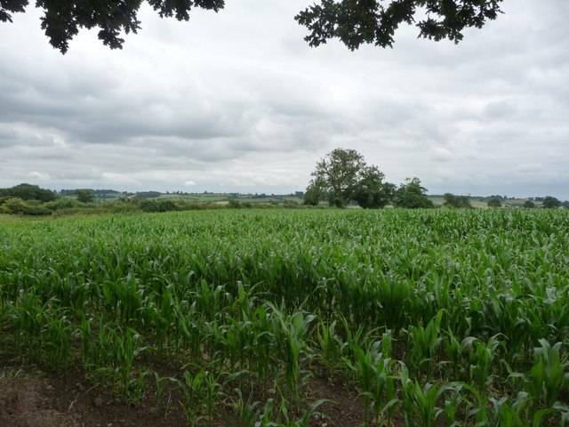 Corn field off Whinny Bank