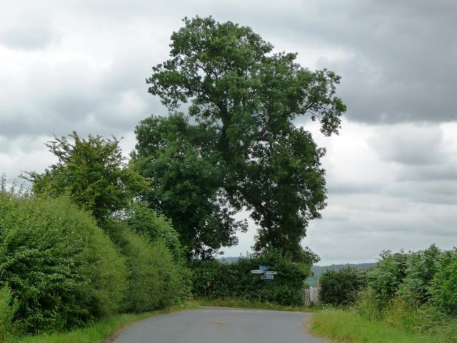 Trees at the road junction