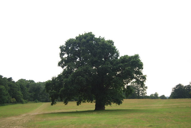 Single tree in Earlham Park
