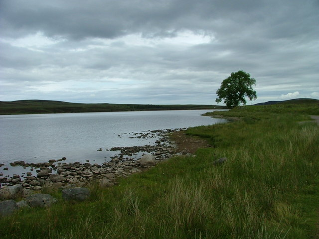 Tree on the shore of Lochindorb