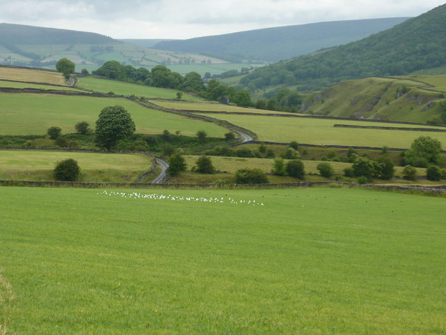 Gulls in a field near Intake Dale