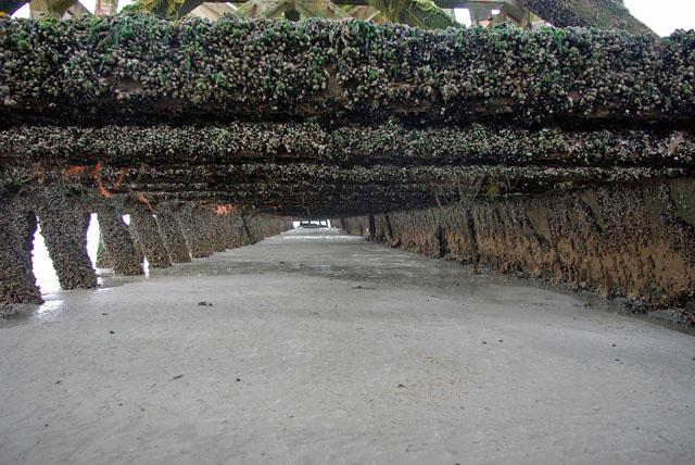 Under Newhaven East Pier