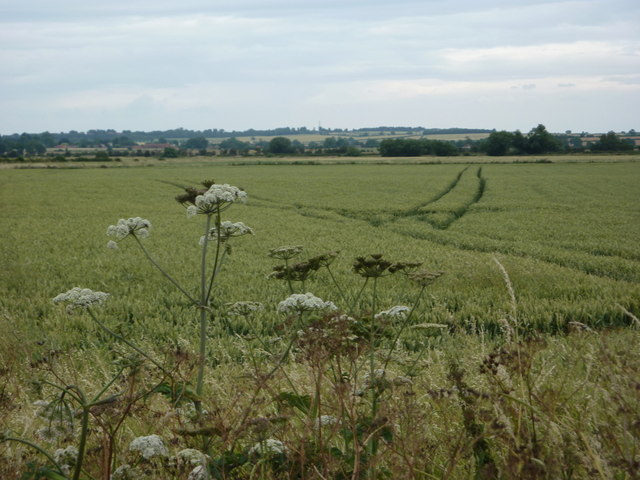 Wheat field by Chain Bridge Lane